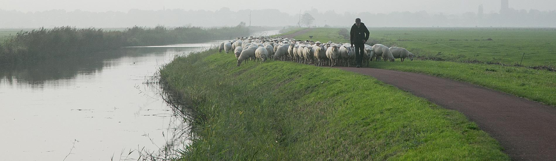 schapenslide